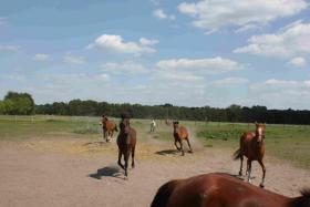 Foto 3 Pferdeboxen zu vermieten