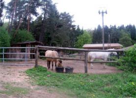 Pferdeboxen zu vermieten……..