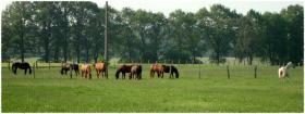 Foto 2 Pferdeboxen zwischen Braunschweig & Peine frei!