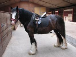 Pferdeparadies-Vorsterhof hat Boxen frei
