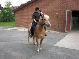 Foto 2 Pferdeparadies-Vorsterhof hat Boxen frei