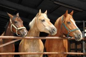 Pferdepensionsplatz