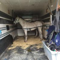 Foto 5 Pferdetransporter Scania R164