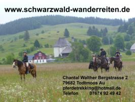 Foto 2 Pferdetrekking, Wanderreiten, Reitferien, Mehrtagestzouren für Erwachsene