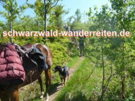 Foto 5 Pferdetrekking, Wanderreiten, Reitferien, Mehrtagestzouren für Erwachsene