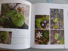 Foto 2 Pflanzen auf Korsika- französisch
