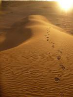 Pilates Yoga-Workshop und Urlaub im Süden Marokkos