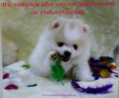 Foto 2 Pomeranian Hündinwelpe creme, 06331-258619
