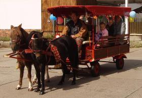 Pony-Kutschfahrten & Pony-Reiten