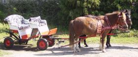 Foto 2 Pony-Kutschfahrten & Pony-Reiten