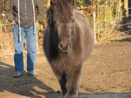 Foto 5 Pony-Stute 4-jährig