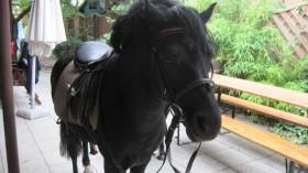 Foto 2 * Ponyhengst sucht Weideplatz *
