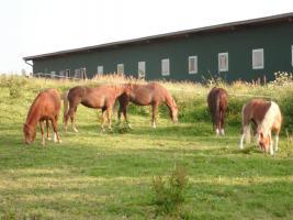Foto 3 Ponytage