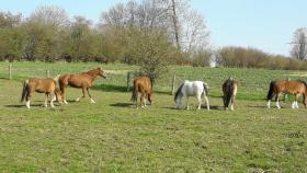 Foto 2 Ponywochenenden