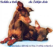 Foto 2 Prager Rattler Hundin