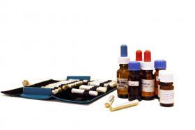 Foto 2 Praxis für Homöopathie, Massage und Aufstellungsarbeit, Stephanie Engert Heilpraktikerin