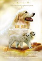 Pyrenäenberghund - Hündin mit FCI Papiere