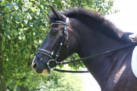Quarter Horse Mix