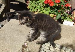 Quicklebendige Kätzchen abzugeben