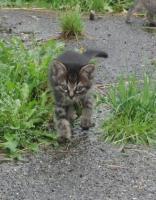 Foto 2 Quicklebendige Kätzchen abzugeben