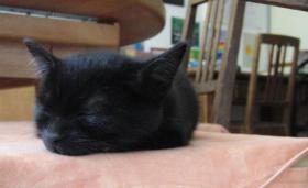 Foto 3 Quicklebendige Kätzchen abzugeben
