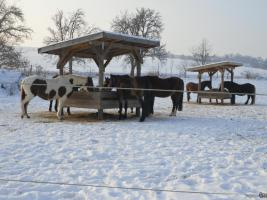 Foto 2 Rancho-de-la-suerte hat noch Boxen und Offenstall-Plätze frei!!