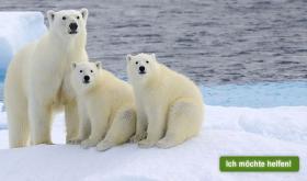 Reichlich Gründe, warum Greenpeace sich für den Schutz der Arktis einsetzen muss