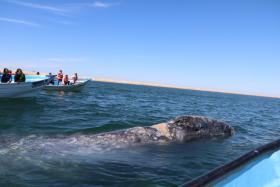 Foto 2 Reisebegleitung privat in Mexiko