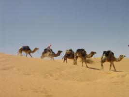 Foto 2 Reisepartner für Sahara Trekking, Tunesien
