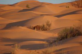 Foto 6 Reisepartner für Sahara Trekking, Tunesien
