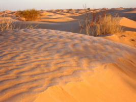 Foto 8 Reisepartner für Sahara Trekking, Tunesien