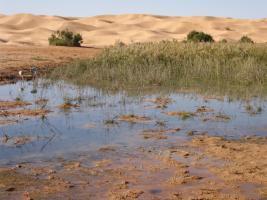Foto 9 Reisepartner für Sahara Trekking, Tunesien