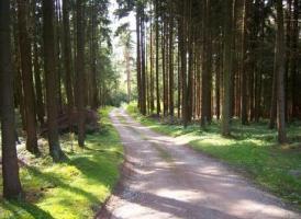 Foto 8 Reitanwesen am Bayerischen Wald in Alleinlage nähe Straubing