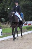Foto 3 Reitbeteiligung an Dressur-, Freizeitpferd