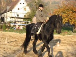 Foto 3 Reitbeteiligung auf umgänglichen und vorwärtsgängigem Friesenhengst in Pirna Neundorf zu vergeben!