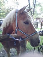 Reitbeteiligung , Meine Pferd sucht dich, zum Reiten, Pflegen und lieb haben