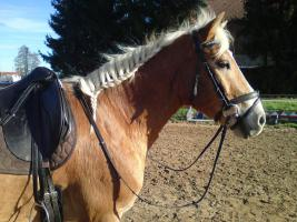 Foto 2 Reitbeteiligung , Meine Pferd sucht dich, zum Reiten, Pflegen und lieb haben