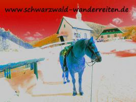 Reiten - Wanderreiten für Erwachsene Todtmoos Au Südschwarzwald
