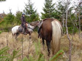 Foto 3 Reiten - Wanderreiten für Erwachsene Todtmoos Au Südschwarzwald