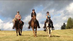 Reiten - Wanderreiten - Pferdetrekking Todtmoos Au