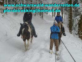 Foto 2 Reiten, Wanderreiten, Pferdetrekking, Freizeitreiten ab Todtmoos Au