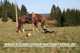 Foto 4 Reitferien für Frauen Wanderreiten im Schwarzwald