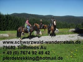 Foto 6 Reitferien für Frauen Wanderreiten im Schwarzwald