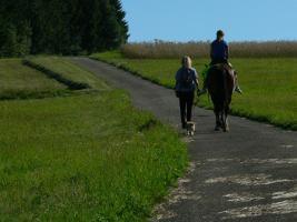 Foto 3 Reitferien im Schwarzwald Wanderreiten, Trekkingtouren ab Todtmoos