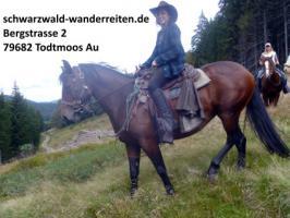 Foto 4 Reitferien, Wanderreiten, Reitausflüge, Tagestouren, Pferdetrekking Todtmoos Au, schwarzwald-wanderreiten