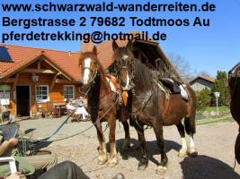 Foto 9 Reitferien, Wanderreiten, Tagestouren, Pferdetrekking rund um den Feldberg