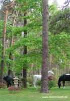 Foto 4 Reklame - Deko Kuh oder Deko Pferd -- oder oder ...