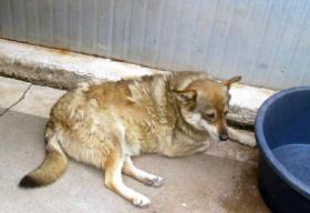 Foto 3 Rex (geb 2005)