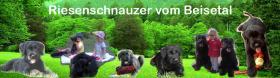 Foto 3 Riesenschnauzerwelpen aus der Mitte Deutschlands
