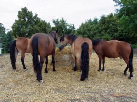 Riesige Auswahl an Pferden und Ponys für jeden Geldbeutel